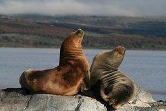 Imagen Recorrido en catamarán por el Canal Beagle y la Isla de los Lobos con salida desde Ushuaia