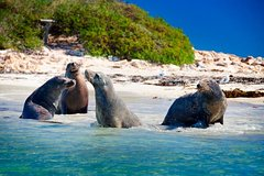Imagen Penguin Island Tour with Dolphin and Sea Lion Cruise