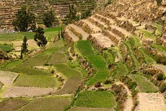 Ver la ciudad,Ver la ciudad,Tours temáticos,Tours históricos y culturales,Excursión a la campiña de Arequipa,Tour por Arequipa