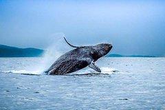 San Francisco Golden Gate Whale-Watching Tour