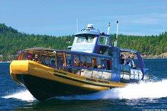 Excursión de avistamiento de ballenas desde Vancouver
