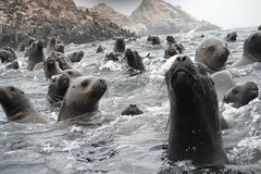 Imagen Swimming with Wild Sea Lions in Lima