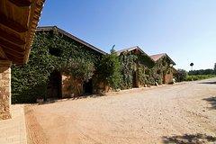 Katakolon Shore Excursion Private Wine-Tasting Tour of Mercouri Estate Winery