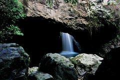 Springbrook National Park & Gold Coast Full Day Luxury Tour from Brisbane