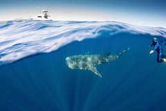 Imagen Swim with Whale Sharks Adventure Day from Exmouth