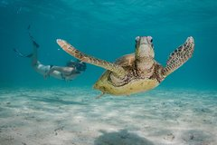 Imagen Marine Life Discovery & Lagoon Snorkeling Tour from Exmouth