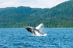 Actividades,Actividades acuáticas,Excursión a Glaciar Mendenhall,Ballenas en Juneau