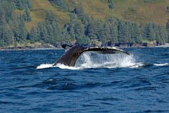 Actividades,Actividades,Actividades,Actividades acuáticas,Actividades acuáticas,Actividades acuáticas,Salidas a la naturaleza,Deporte,Ballenas en Juneau