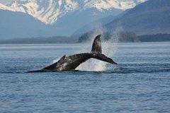Actividades,Actividades,Actividades acuáticas,Actividades acuáticas,Salidas a la naturaleza,Deporte,Ballenas en Juneau