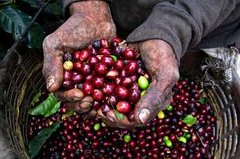 Imagen Colombian Coffee Tour from Bogotá