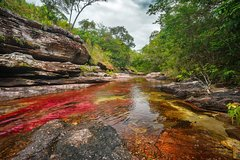 Imagen 3-Day Tour to Caño Cristales from Bogotá
