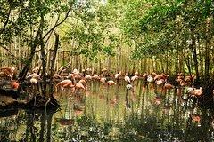 Imagen Excursión al aviario desde Cartagena