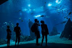 Imagen Lisbon 48-Hour Hop-On Hop-Off Tour with Oceanarium Admission Ticket
