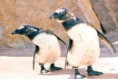 Imagen Eintrittskarte  für Zoo von Lissabon einschließlich Hop-on-Hop-off-Tour