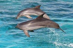 Imagen Kangaroo Island 75-Minute Ocean Safari