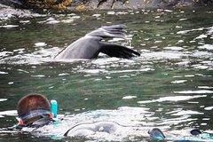 Imagen Kangaroo Island Ocean Safari - Snorkeling Safari