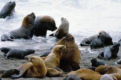 Imagen Excursión por la costa: escapada privada de un día a la Península Valdés desde Puerto Madryn