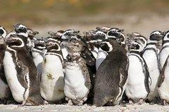 Imagen Excursión terrestre en Puerto Madryn: Excursión privada de un día a la colonia de pingüinos de Punta Tombo