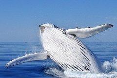 Imagen Whale Watching Busselton Departing from Busselton Jetty