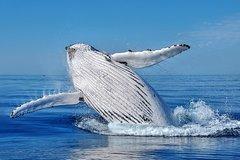 Imagen Whale Watching Dunsborough