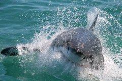 Actividades,Actividades,Actividades acuáticas,Actividades acuáticas,Adrenalina,Deporte,Tiburones en Ciudad del Cabo