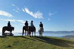 Imagen Guided Horse Trekking from Rotorua