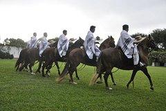 Imagen Peruvian Paso Horses Show Including Lunch