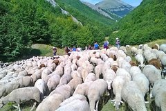 A day with the shepherd milking sheeps and making cheese in the National Park of Abruzzo