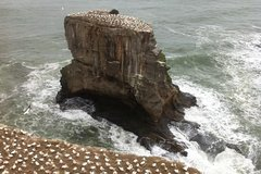 Imagen West Coast Gannet Colony and Wine Tour from Auckland
