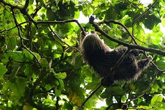 Imagen Mombacho Cloud Forest Reserve: Hike and Zipline Tour