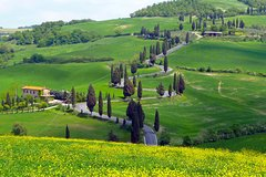 Pienza Val d'Orcia Montalcino Brunello Wine and Pecorino Cheese PRIVATE TOUR from Siena