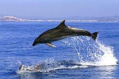 Imagen Gibraltar Dolphins Full Day Trip from Costa del Sol