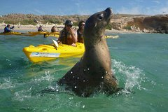 Imagen Penguin and Seal Island Kayak Tour