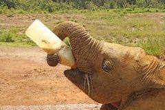 watch bf405 b1609 Imagen Guided Day Tour in Nairobi  Sheldrick Trust Elephant Orphanage,  Giraffe Center and Maasai