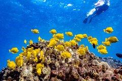 Hilo Hawaii Beach Snorkel – Sea Turtle and Black Sand Lagoon 21759P6