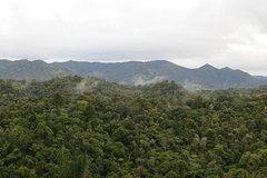 Imagen Full-Day Rainforest Getaway in Northland