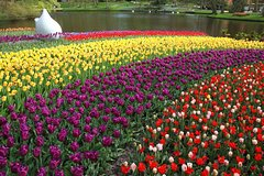 Brussels Belgium Keukenhof and Delft Tour from Brussels 2200P35