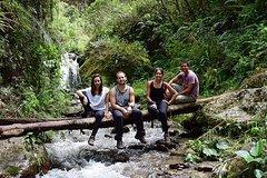 Imagen Half Day Hike to Yanachaga National Park