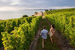 Imagen Full-Day Taste the Wines of Marlborough Tour