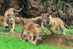 Imagen Excursión privada al zoológico de Cali con entrada