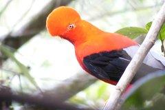 Imagen Excursión privada de avistamiento de aves en el bosque nuboso