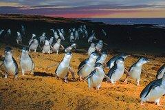 Imagen Excursion à Phillip Island au départ de Melbourne