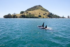 Imagen 1-Hour Tauranga Harbour Scenic Cruise from Mount Maunganui