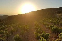 Kefalonia Vineyard Sunset Private Tour & Picnic