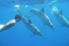 Captain Cook Hawaii Wild Dolphins and Reef Snorkel Kealakekua Bay 22796P9