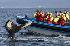 Activities,Activities,Water activities,Water activities,Nature excursions,Sports,Whale Watching from Húsavik