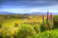 Imagen Full-Day Wine Gourmet and Scenic Delight Tour of Marlborough from Blenheim