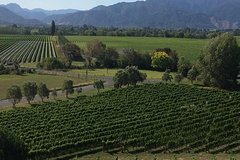 Imagen Half-Day Marlborough Gourmet Tasting Tour from Blenheim