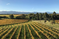 Imagen Winter Wine Gourmet and Scenic Pleasures of Marlborough: Group Tour