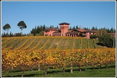Imagen Private Tour: Marlborough Winter Wine and Scenic Tour from Picton